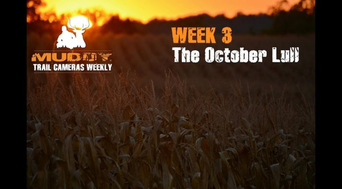 The October Lull
